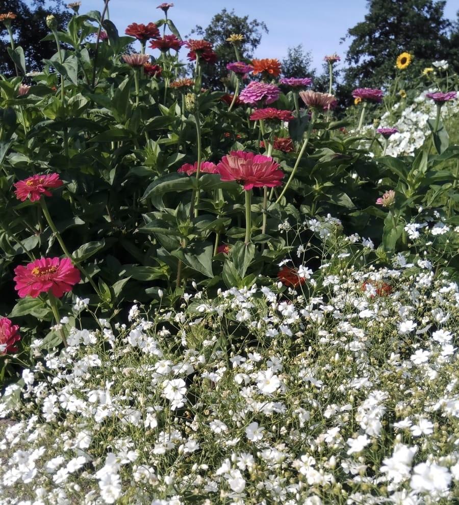 Bloemenplukweide open dit weekend!