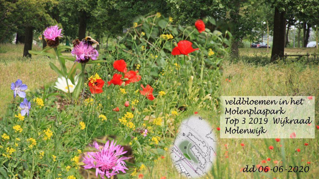 Toch nog veldbloemen in het Molenplaspark!
